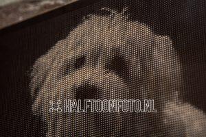 Halftoonfoto van hond